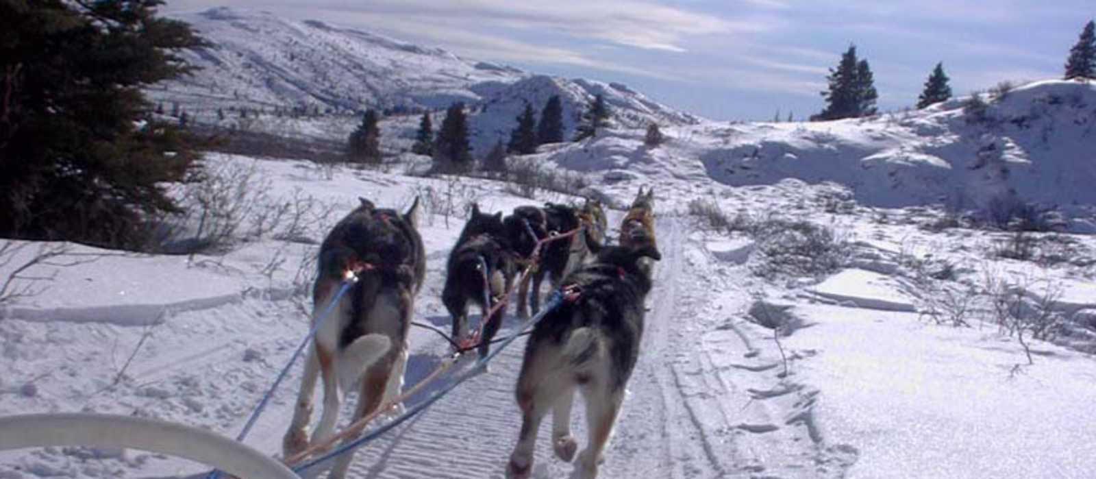 Unterwegs mit den Hunden