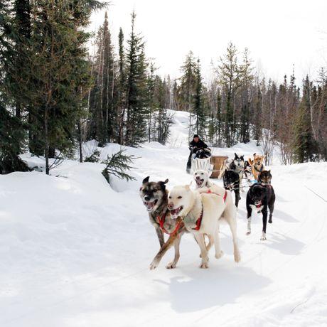Per Hundeschlitten quer durch den Wald