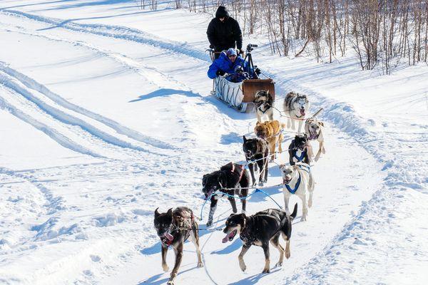 Hundeschlitten fahren