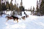 Helikopter- und Hundeschlitten-Tour zum Mendenhall Gletscher