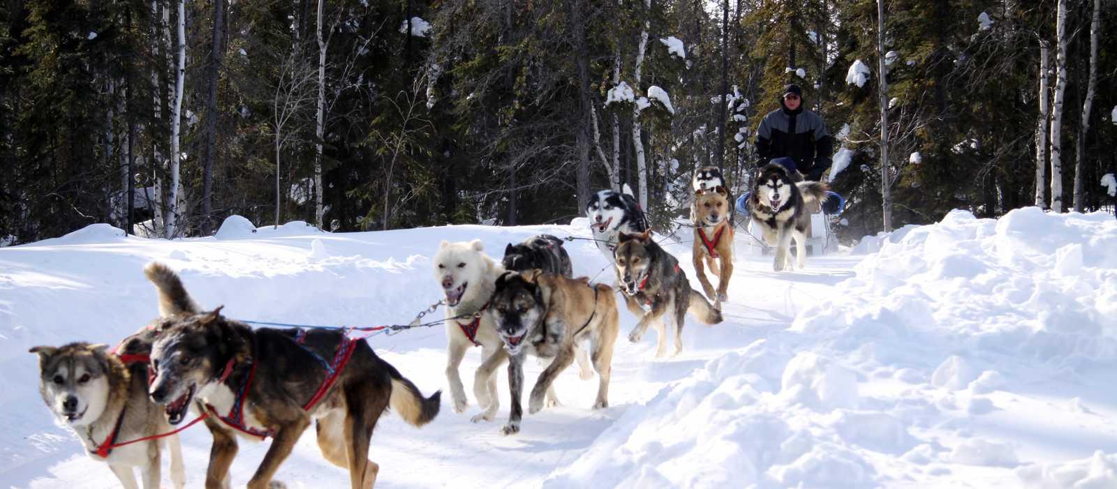 Mit zehn Hunden durch den Wald