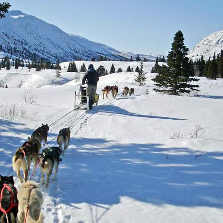 Impression Hundeschlitten-Tour Sky High Mushing Trails