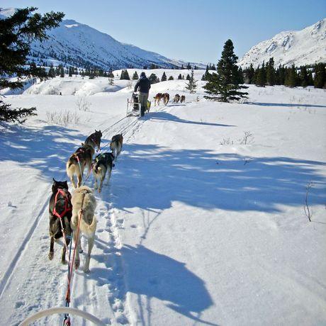 Impression Hundeschlitten-Tour Sky High Mushing Trails