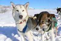 Winterwonderland Yukon 2017