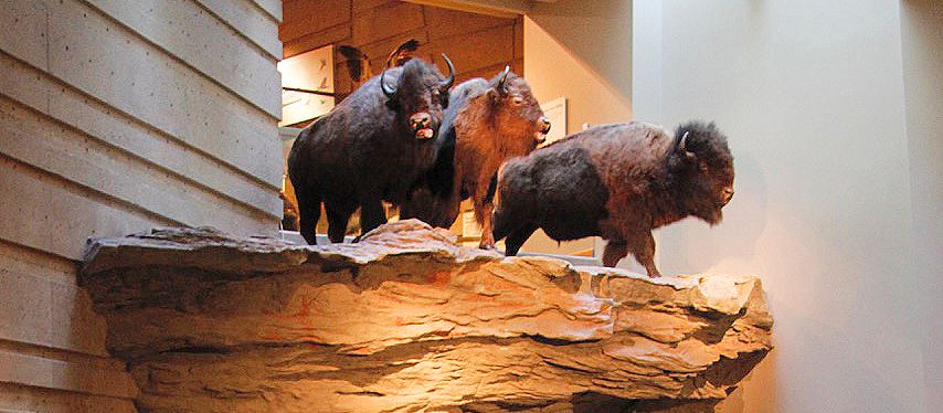 Head Smashed In Buffalo Jump