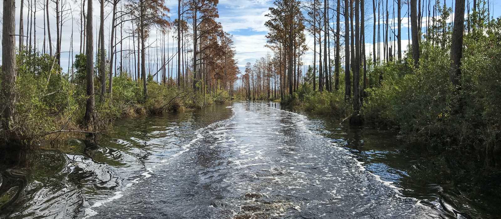 Okefenokee Swamp Tour