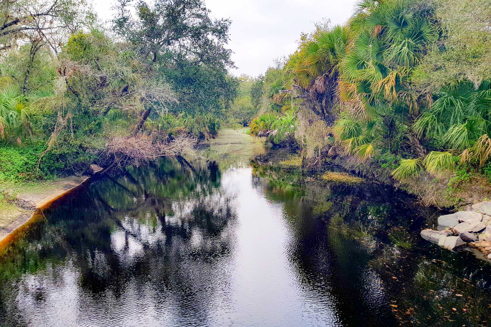 Der Myakka River State Park in Florida