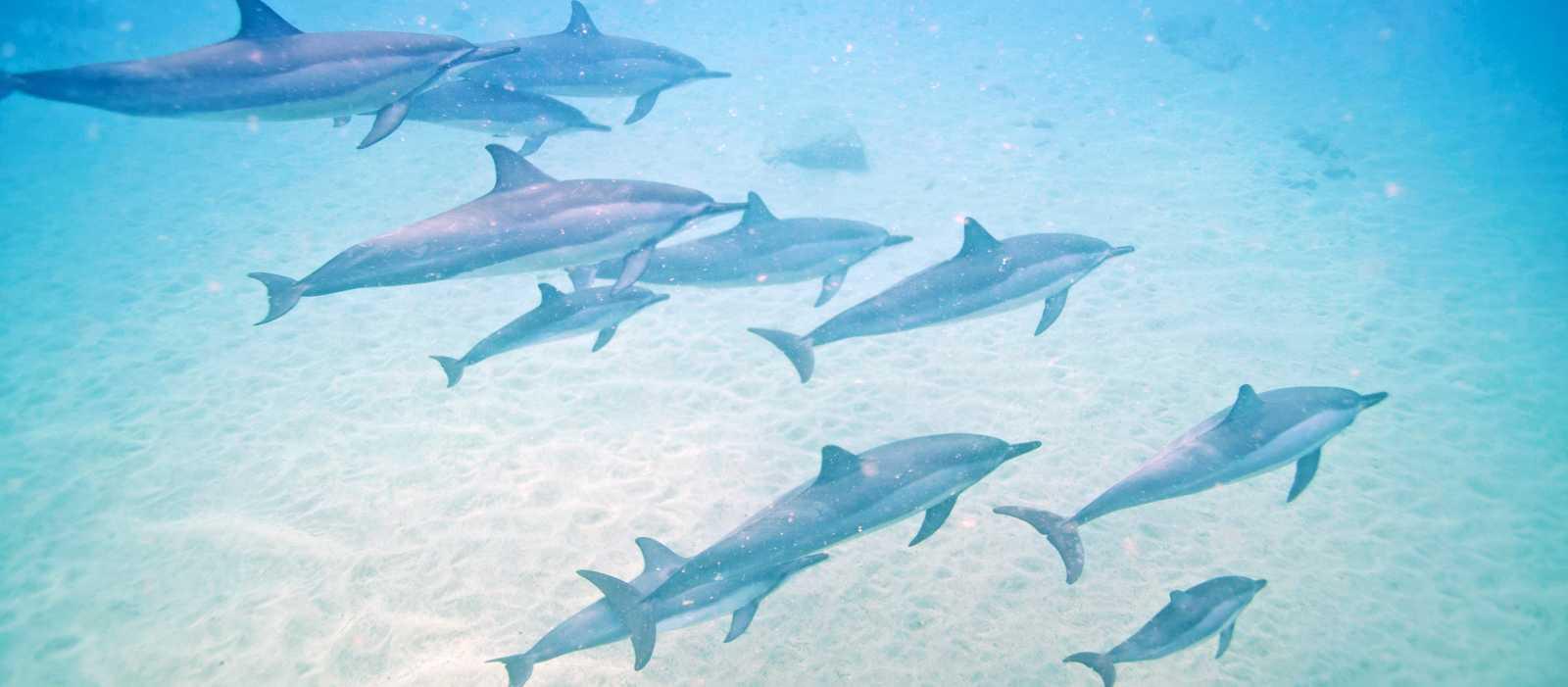 Delfine Westküste Oahu