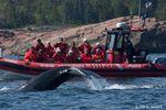 Québec – Walbeobachtung auf dem Sankt-Lorenz-Strom