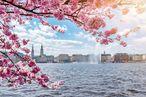 Blick auf die Hamburger Alster durch einen blühenden Kirschbaum hindurch
