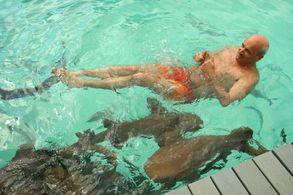 Schwimmen mit Cat Sharks auf den Exumas