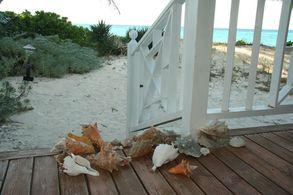 Conch - Ausbeute auf Andros