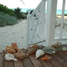 bahamas, andros, muscheln, conch, veranda, weiss, strand, meer, himmel