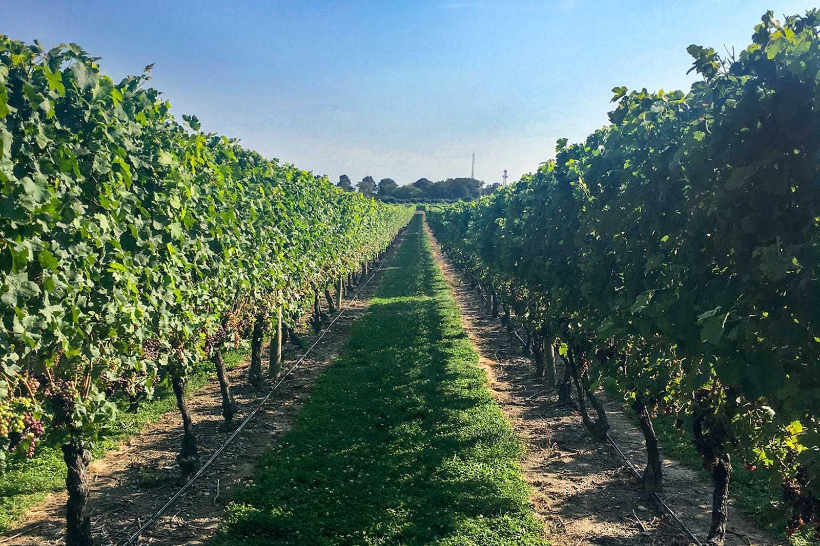 Die Weinkellerei Newport Vineyards