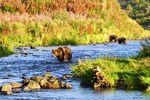 Bärenbeobachtung auf Kodiak Island