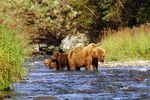 Bear & Wildlife Viewing Flight Safari – Homer