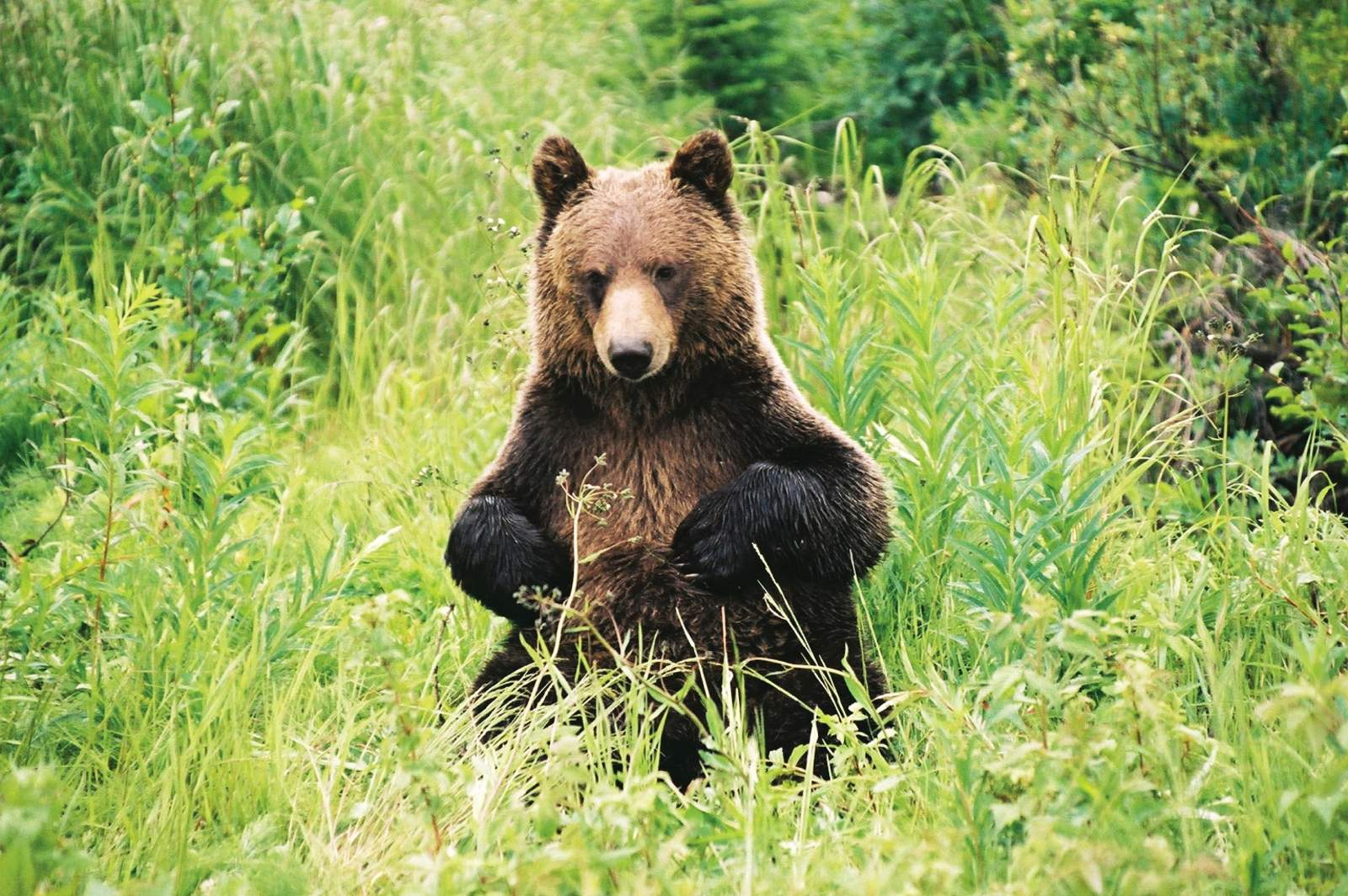 Impressionen Discover Grizzly Bears