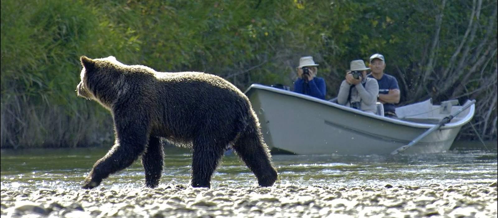 Impressionen Bärenbeobachtung Tweedsmuir Lodge