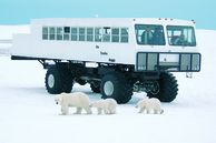 Tierbeobachtung Kanada: Expedition im Tundra Buggy