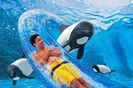 Orlando: Aquatica – was für ein großartiger Spaß