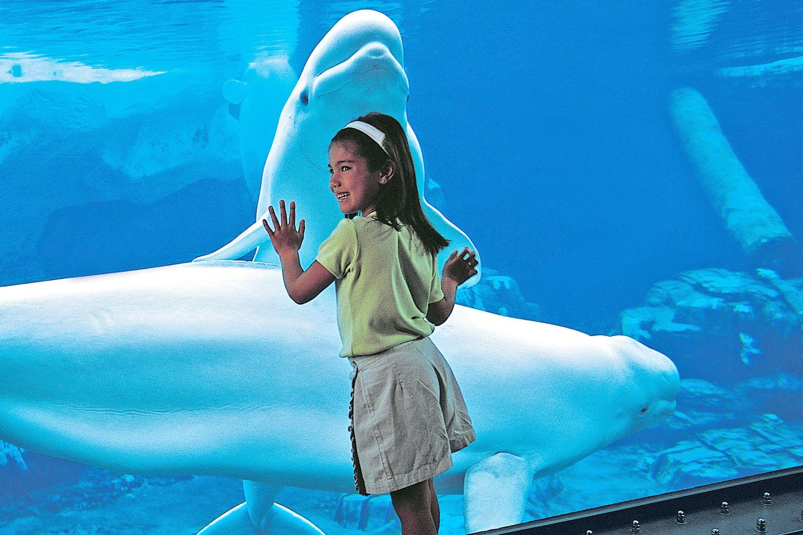 Beluga-Aquarium im Seaworld Orlando