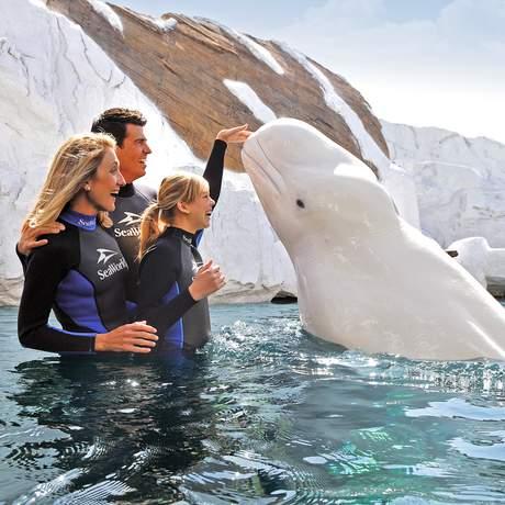 Familie trifft auf Beluga