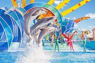 Orlando: Seaworld Blue Horizons Show