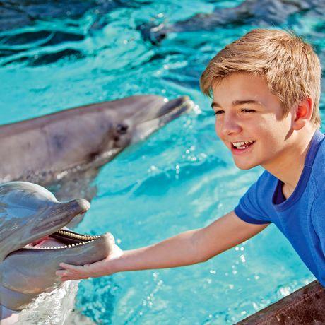 Junge streichelt Delfin