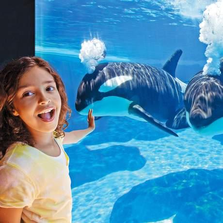 Blick auf Orcas