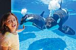 SeaWorld Parks Orlando - 3 Tage Ticket
