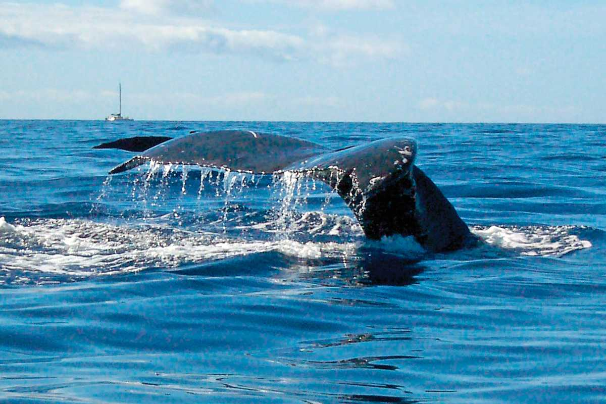 Teralani Whale Watch - Review of Teralani Sailing, Lahaina ...