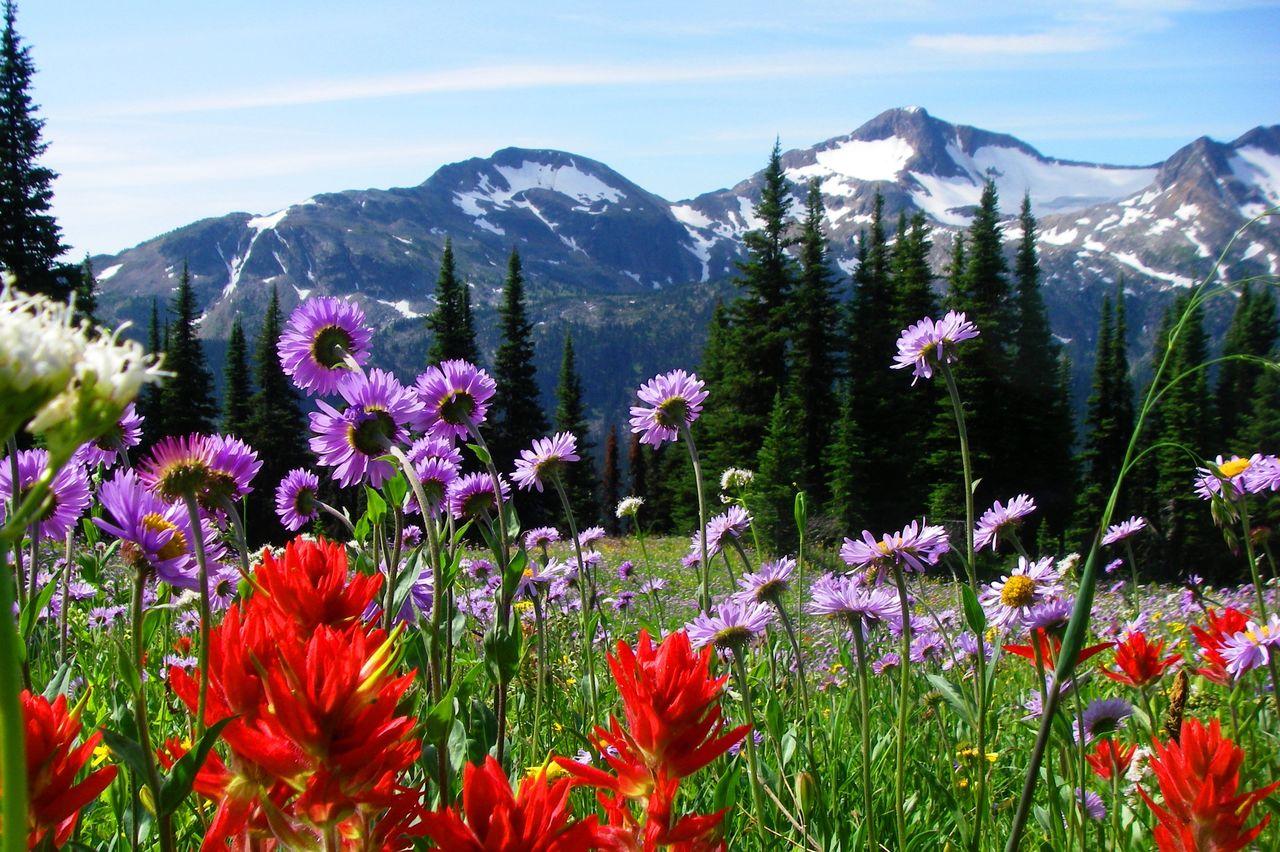 Battle Mountain Hiking Tour