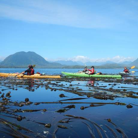 Impressionen Discover the Rainforest Kayak & Hike