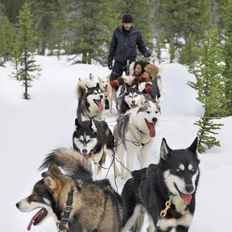 Hundeschlittenfahrt in Jasper, Alberta
