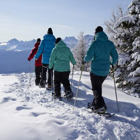 Lake Louise Snowshoe Tour in Banff, Alberta