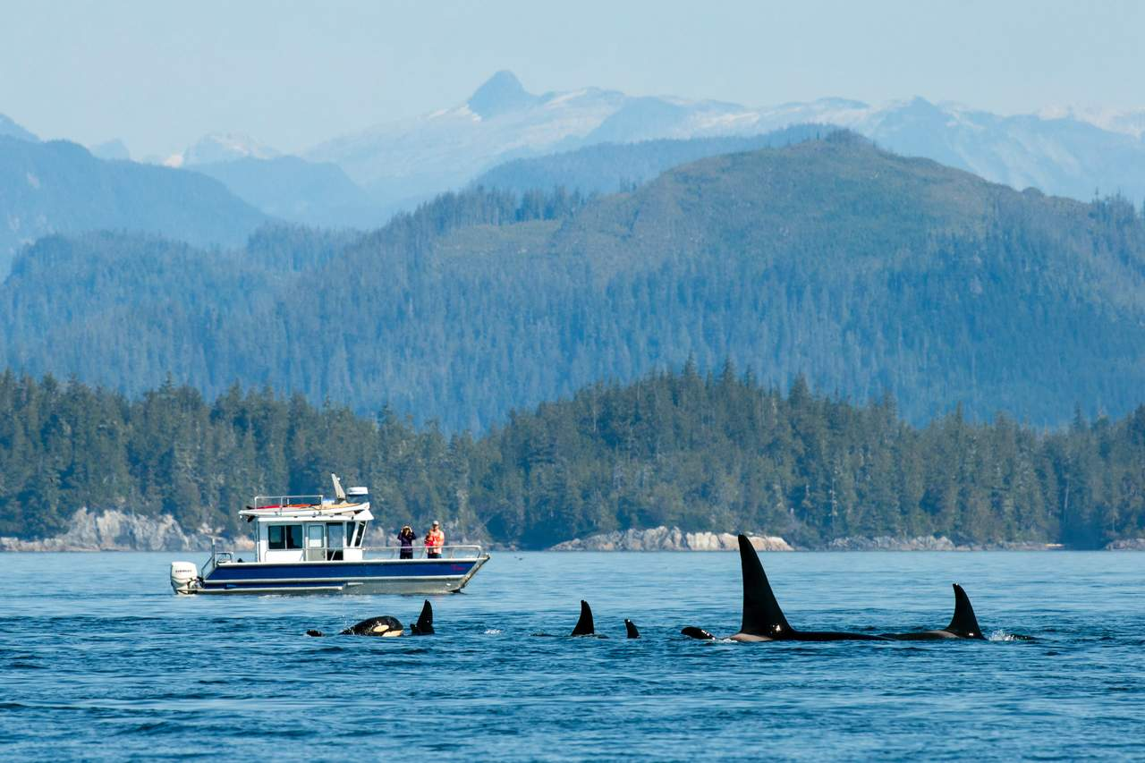 Impression Nimmo Bay Resort, Port McNeill, British Columbia