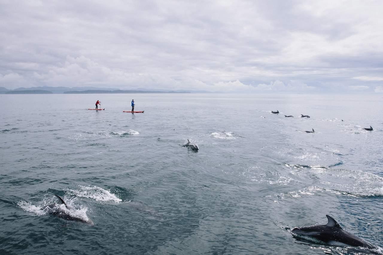 Stand-up-paddeln mit Delfinen beim Nimmo Bay Wilderness Resort