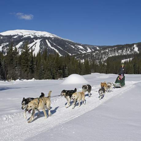 Hundeschlitten-Tour durch Sun Peaks, British Columbia