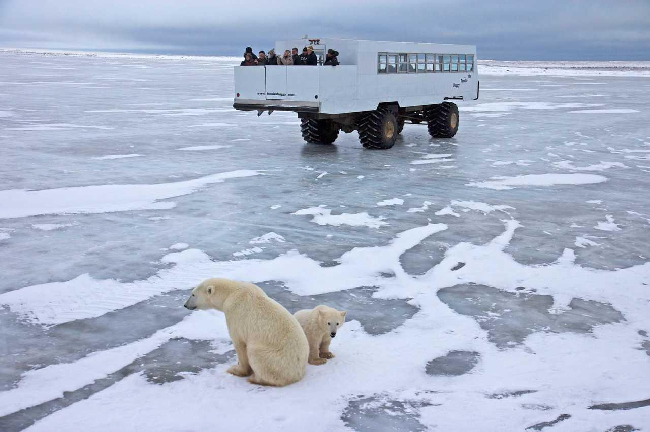 Baeren auf Eis