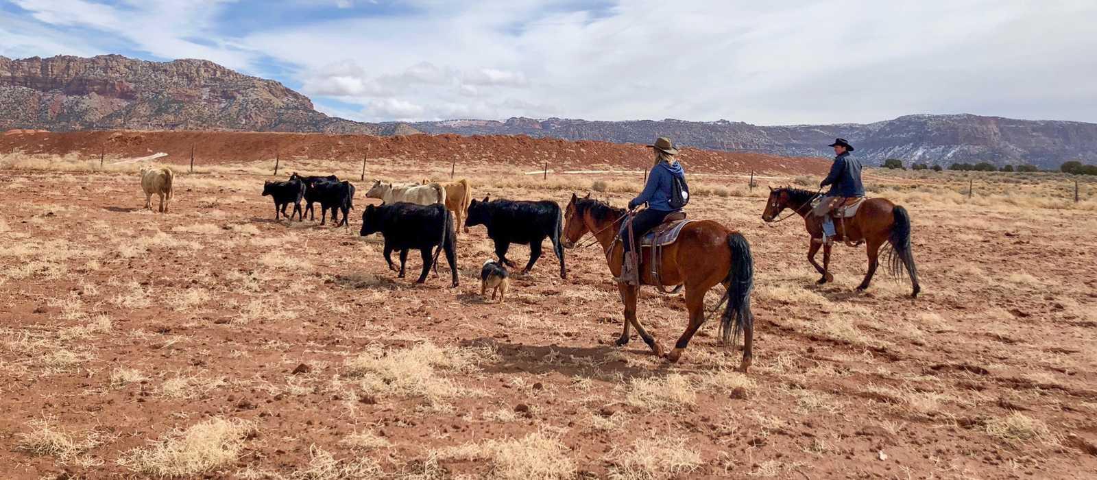 Zion's Blue Sage Resort & Ranch in Hildale bietet vielseitige Ausflüge für Pferdefreunde an