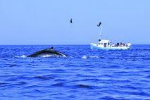 Walarten in Kanada: Walbeobachtung in Nova Scotia