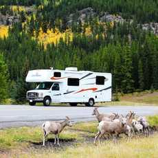 Canadream Wohnwagen mit Schafen im Kananskis County, Alberta