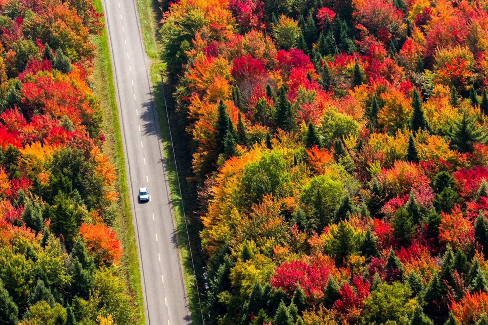 Straße durch Herbstwald in Quebec Kanada