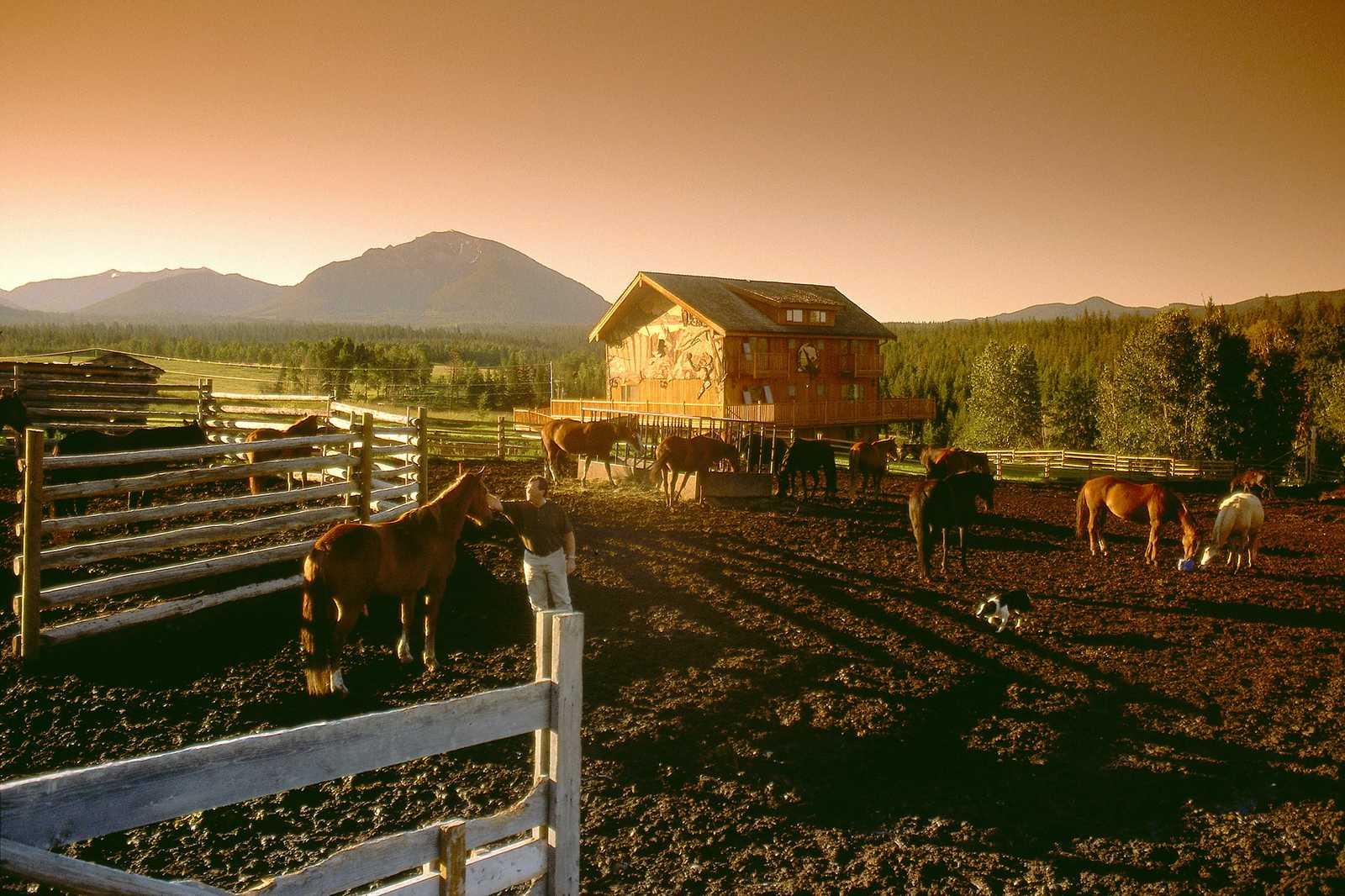 Pferde auf der Ranch