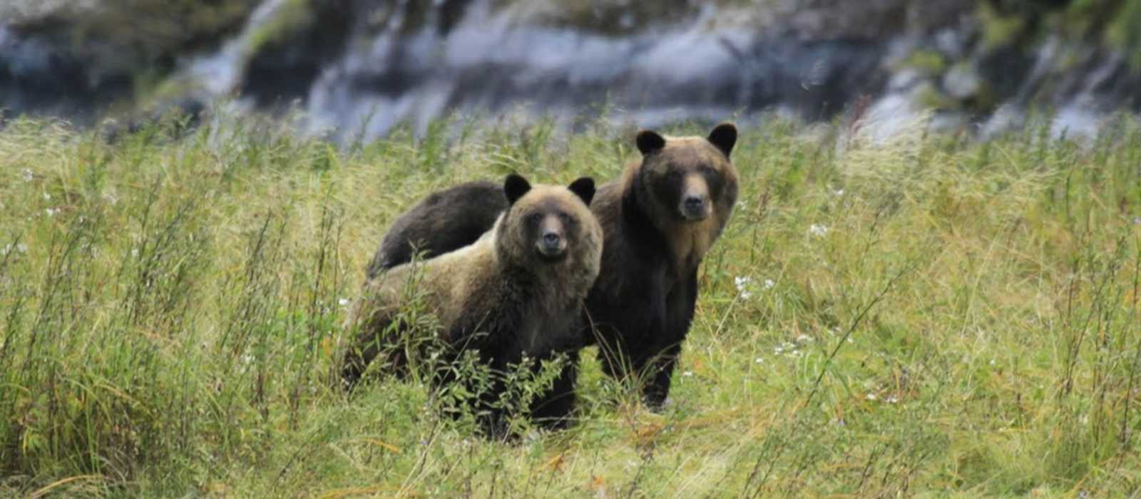 Impressionen Spirit Bear Lodge