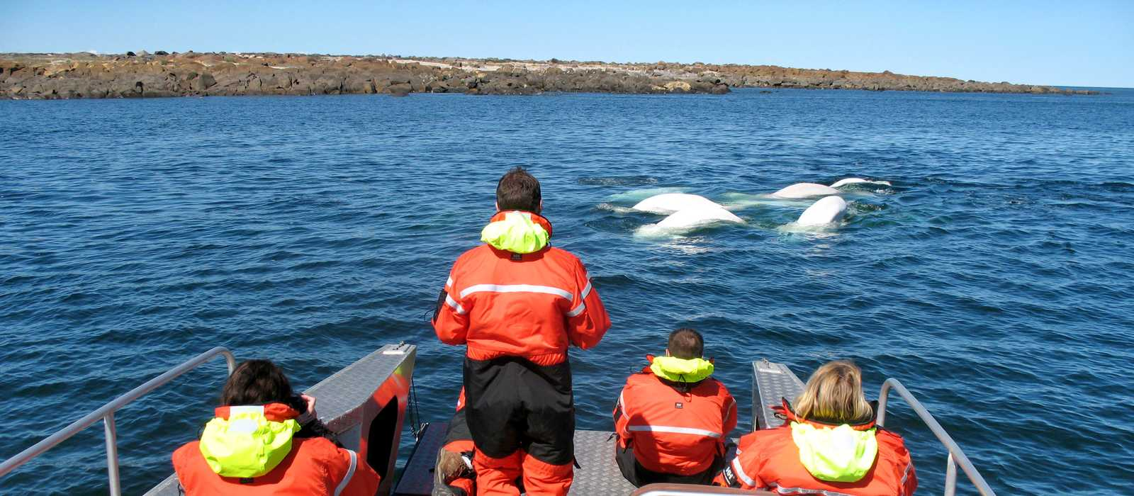 Die Beluga Whale Dream Tour der Lazy Bear Lodge in Churchill, Manitoba