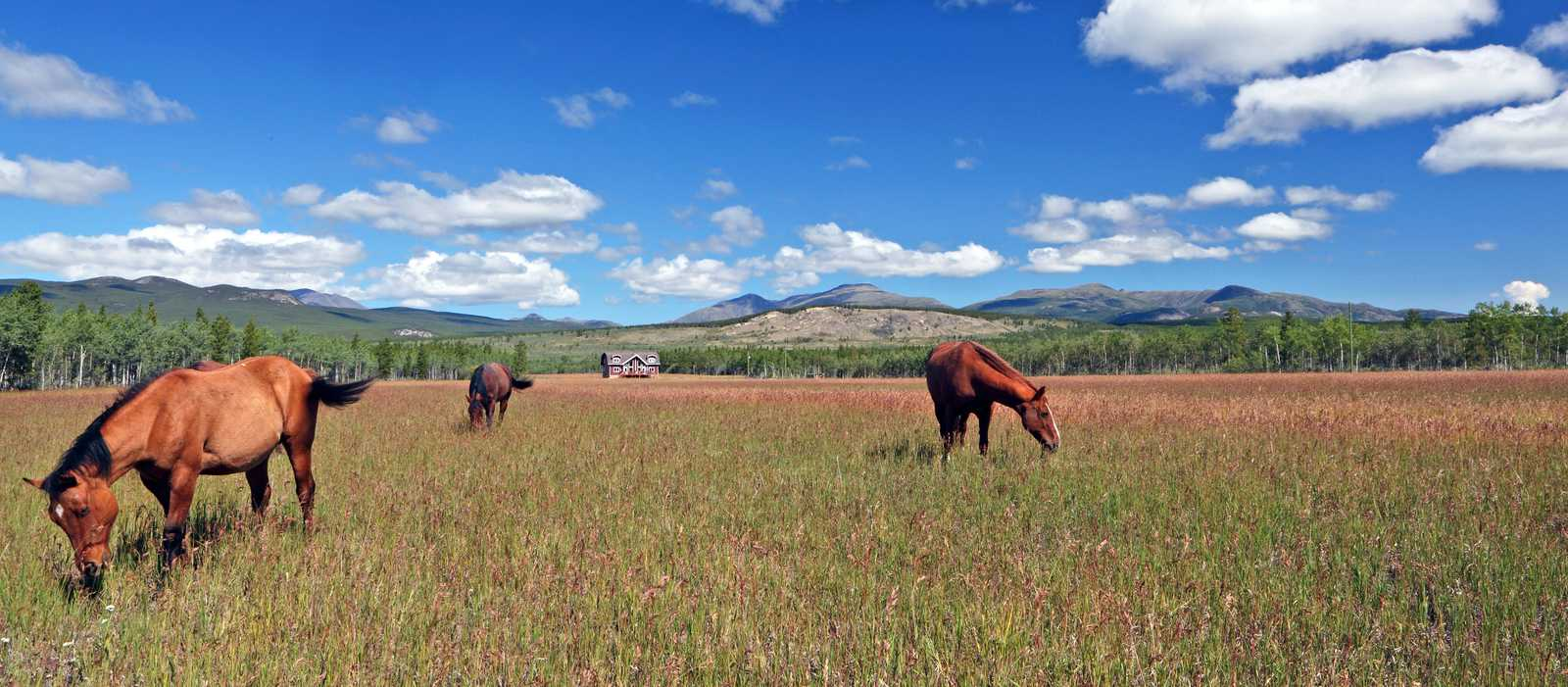 Black Hills Wild Horse Sanctuary