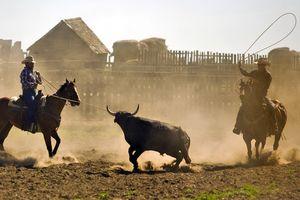 La Reata Ranch: Cowboyarbeit
