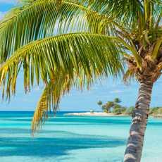 Palme vor karibischem Strandpanorama