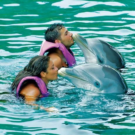 Mit Delfinen schwimmen auf den Bahamas